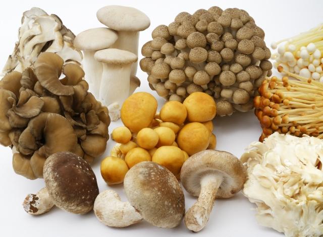 21種類の茸菌糸体
